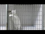Этот кот живет в одной из ветеринарных клиник Марселя. И каждый раз ему удавалось выйти из клетки ночью. Тогда работникам стало