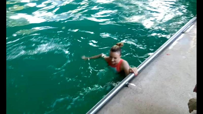 самый лучший день когда мечты становятся реальностью катаюсь с дельфинами в ростовском дельфинарии дельфинотерапия покатушк