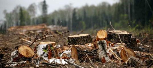 В Усть-Илимском районе пресечена незаконная вырубка леса