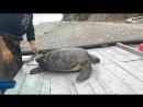 Покатай меня большая Черепаха!  🐢🐢🐢🐢🐢