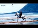 ALVIN LEE - The Bluest Blues (HQ Sound, HD 1080p, Lyrics)
