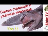 Самые странные и ужасные животные: Топ 11