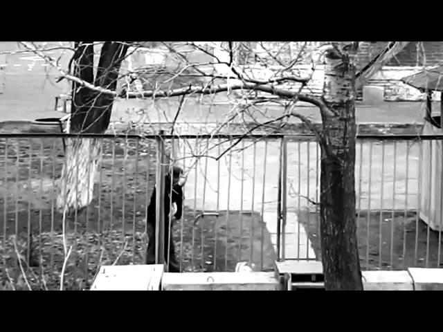 «Кальвадос» - «За страну обидно» (алко-арт-хаус-версия:)