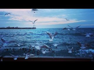 Nika_moscow_yalta video