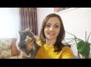 ВЛОГ еду к My little Nastya играю с моими кошками Мусей и с Кнопой