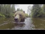 На Сахалине засняли медведя, который лакомился рыбой из рыбацкой сети