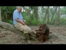 BBC Аттенборо 60 лет с дикой природой Наша хрупкая планета 3 3