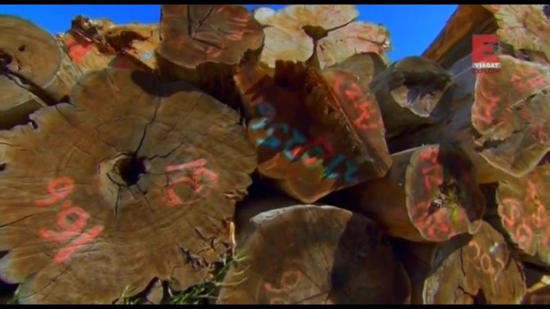 Уникальные дома из дерева. Серия 1