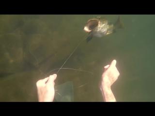 Что можно найти на дне озера?