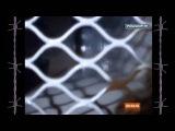 Бумер - Полетят мотыльки над тайгой