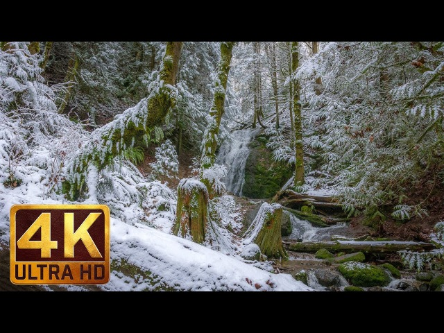 Winter Forest Walk in 4K | 2 HRS Relaxation Video with Beautiful Music - WATER FOREST - Part 5