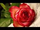 Музыка души Полностью Музыка Коновалова С С Монтаж Никитенкова Лариса 13