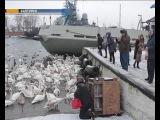 Жители Балтийска организовали акцию по спасению лебедей
