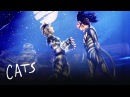 The Battle of Pekes and the Pollicles Part 2   Cats the Musical