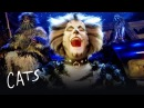 The Battle of Pekes and the Pollicles Part 1   Cats the Musical