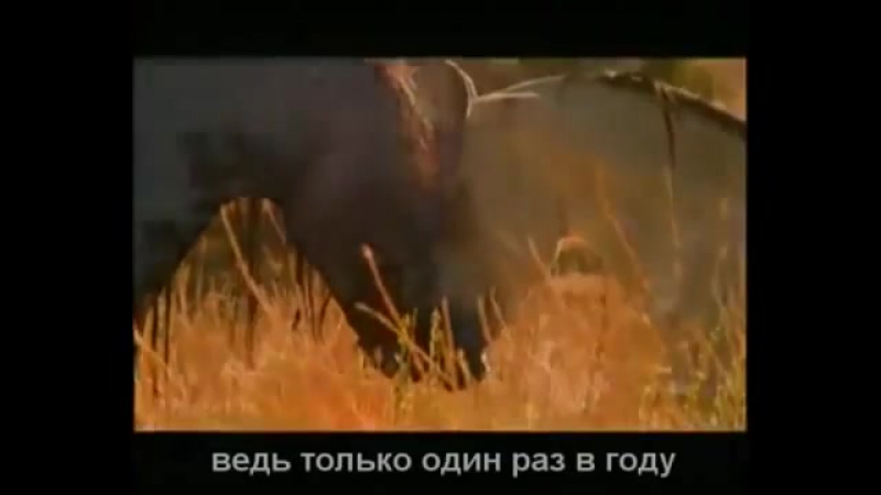 Krasivaya_muzyka_o_nezhnosti_i_lyubvi_Arabatskiy_kon_mp4
