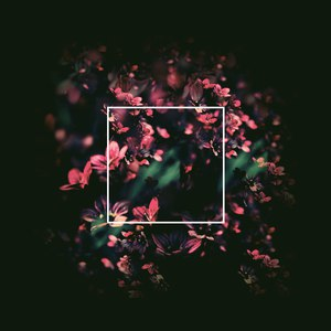 Jan Amit альбом Flowertraces