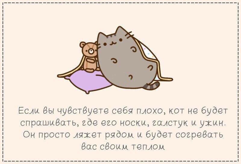 Мучительный выбор между котом и мужчиной (7 фото)
