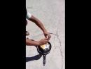 Соседи из Шымкента прислали видео для Ташкентцев