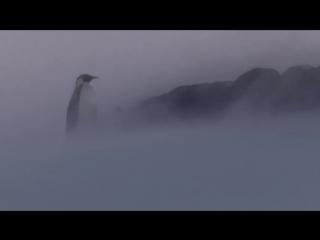 BBC Пингвины. Шпион в стае 1 серия