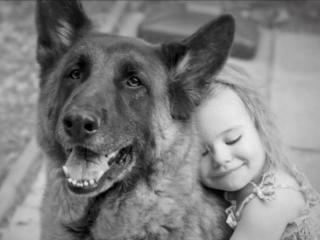 Милосердие к животным-долг каждого человека