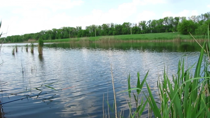 07.07.2011 Донецк - рыбалка и водяная крыса