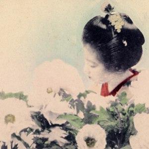 Secede альбом Silent Flower Observers