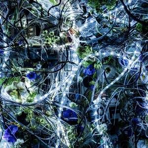 Aimer альбом ninelie EP