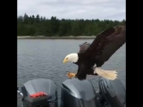 WOW! Up Close and Personal with a Bald Eagle