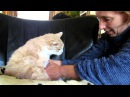 Giving my 18 year old cat Garfield elderly care , so he doesn't become a Smelly Cat