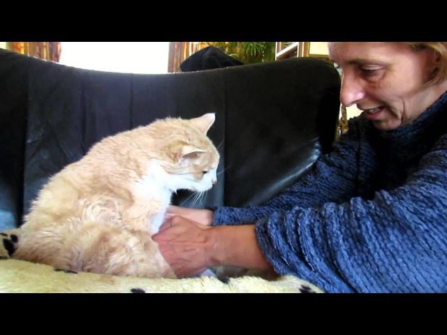 Giving my 18 year old cat Garfield