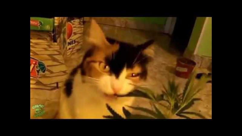 Pisica lu' Snoop Dog