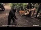 macaco atira com AK 47 Monkey fire with AK 47