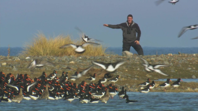 BBC Тайная жизнь птиц Жизнь на краю 2010 BDRip 720p