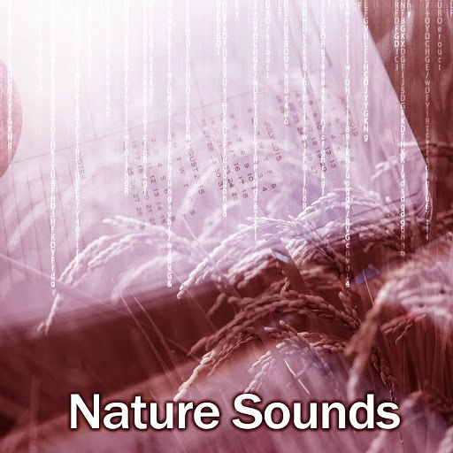 Deep Focus альбом Nature Sounds – Deep Concentration, Music for Learning, Reading, Study, Brain Power
