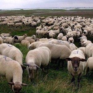 $uicideboy$ альбом Grey Sheep