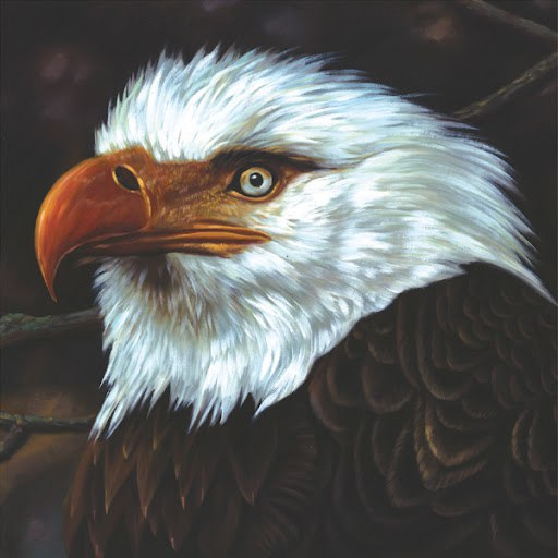 Mogwai альбом The Hawk Is Howling