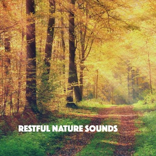 Rain альбом Restful Nature Sounds