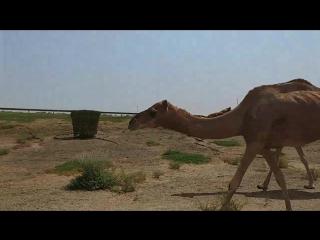 UAE . SHARJAH
