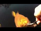 Золотая рыбка-пенсионерка на иждевении у старика.