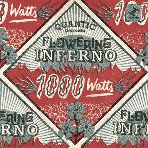 Quantic альбом 1000 Watts
