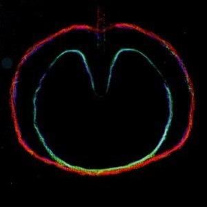XTC альбом Wasp Star (Apple Venus, Pt. 2)