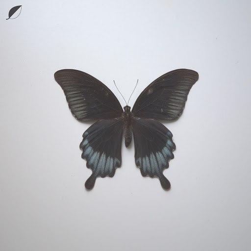 Christian Löffler альбом All Comes / Notes