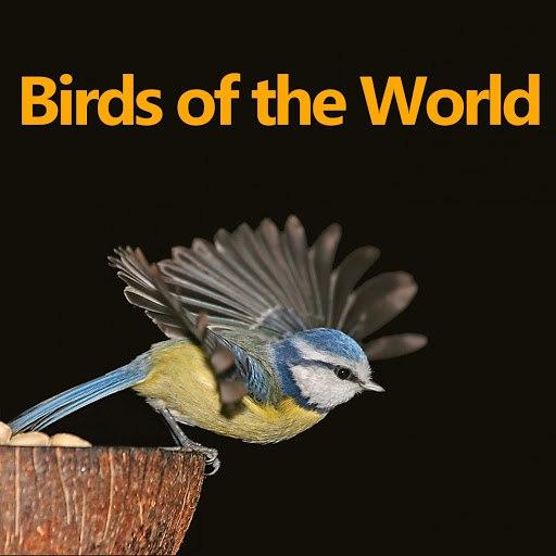 Bird альбом Birds of the World
