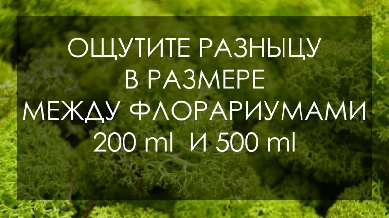 Флорариум 200ml - новый тренд в мире подарков и декора