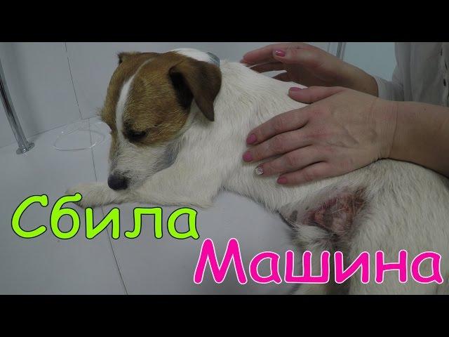 ВЛОГ Нашу Собаку сбила машина Водитель уехал Мама сильно плачет Спасение Операц...