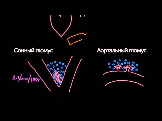 Периферические хеморецепторы