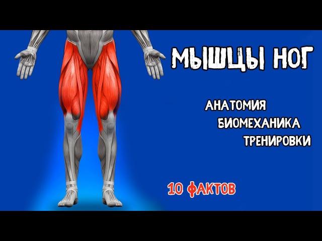 НОГИ. 10 Фактов. Тренировки, Биомеханика, Анатомия.