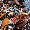 ВестВторМет - Прием металлолома в СПб