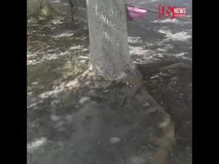 Во Владикавказе местные «тимуровцы» своими силами привели в порядок дом и территорию вокруг него